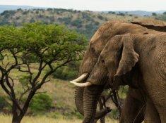 Nambiti-Hills-Wildlife-2