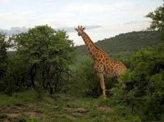 Nambiti-Hills-Wildlife-3