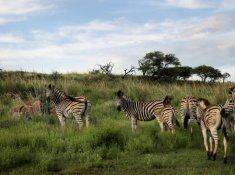 Nambiti-Hills-Wildlife-5