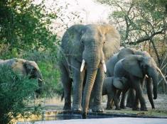 Notten's Bush Camp Elephants