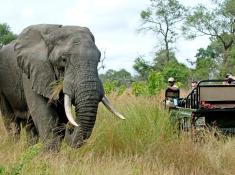 nottens-elephant-sighting
