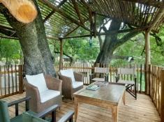 nottens-tree-in-deck