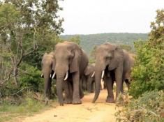 Nungubane Elephants