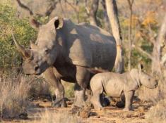 Nungubane Rhinos