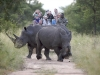kapama-rhino-on-drive