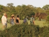 rhino-walking-safaris