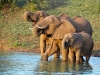 thanda-elephants-at-waterhole