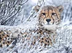 Rogge-Cloof-Cheetahs-4