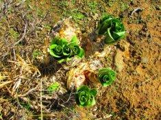 Rogge-Cloof-Plants-2
