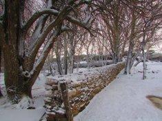 Rogge-Cloof-Snow-1