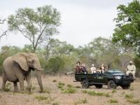 Sabi Sabi Elephant Sighting