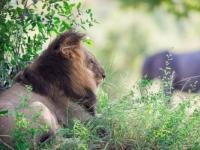 Sabi Sabi Lion and Elephant