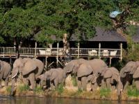 Sabi Sabi Deck and Elephants