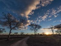 Sabi Sabi Landscape 2