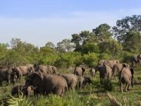 Sabi Sabi Elephants