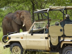 Guest from Rhino Post Camp on game drive looking at Elephant (Loxodonta africana). Kruger National Park. Mpumalanga. South Africa.