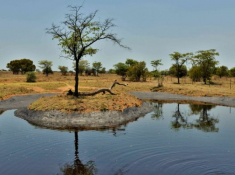 Safari Plains Waterhole