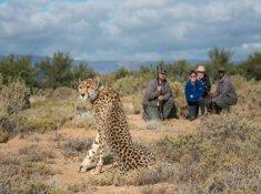 Sanbona-Wildlife-1