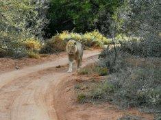 Sanbona-Wildlife-4