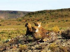 Sanbona-Wildlife-5