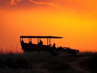 Shamwari Safari 1