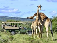 Shamwari Safari 3