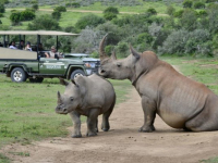 Shamwari Safari 6