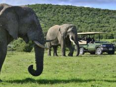 Shamwari Safari 8