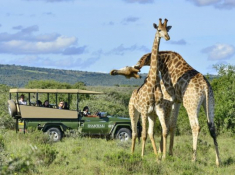 Shamwari Safari 4