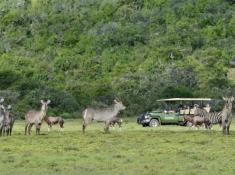 Shamwari Safari 5