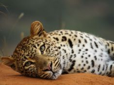 Shamwari-Game-Reserve-Wildlife-10