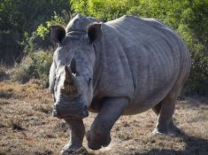 Shamwari-Game-Reserve-Wildlife-3