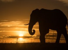 Shamwari-Game-Reserve-Wildlife-6