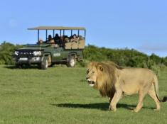 Shamwari Riverdene Safari 4