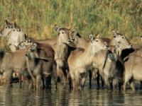 Singita Kruger Park