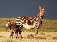 Swartberg Private Game Lodge Wildlife 2