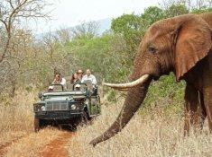 Thanda-Game-Drive