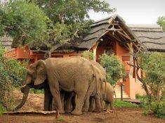 Thanda-Wildlife-2