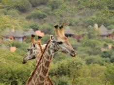 Thanda-Wildlife-3