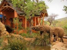 Thanda-Wildlife-5
