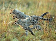 Thanda-Wildlife-6