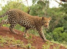 Thanda-Wildlife-7