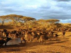 Thanda-Wildlife