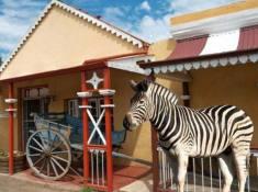 tuishuise-cradock-zebra
