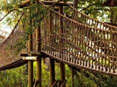 Ulusaba-Safari-Lodge-Swing-Bridge