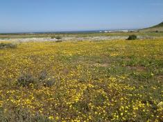 flowers-in-postberg-west-coast-national-park