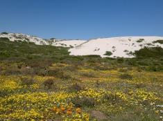 west-coast-national-park-flowers