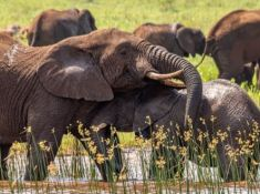 White-Elephant-at-Africamps-9