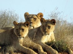 Woodbury-Lodge-Lions