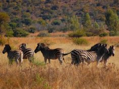 Zebra-Country-Lodge-11